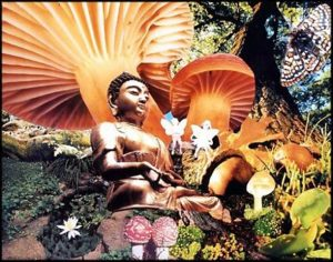 psychedelic meditation